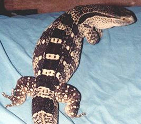 NEW REPTILES COMEING FOR SALE AND ADOPTION IN THE NEXT FEW